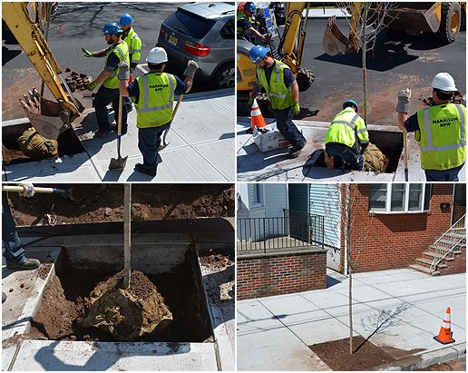 Collage of Public Works Workers Planting Tree